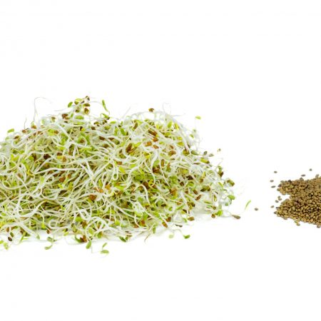 Alfalfa sprouts background