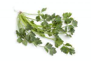 Fresh celery leaves