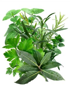 Mediterranean Herbs