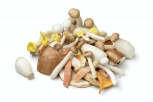Mixture of fresh raw variation mushrooms